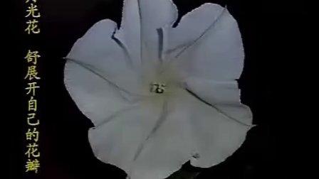 钟蕙广西《花钟》特等奖全国第七届青年教师阅读教学观摩活动视频2008年10月江西.南昌