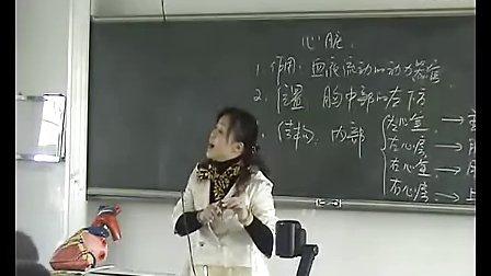 血液循环浙教版九年级初三科学优质课