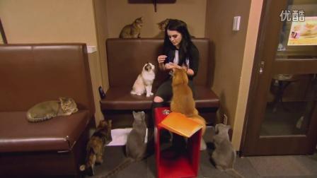 【Total Divas】佩琪竟然也是爱猫之人