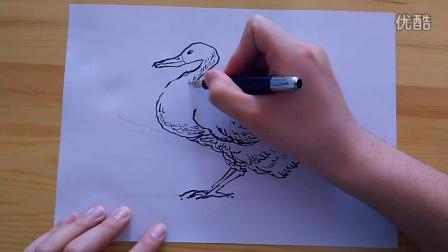 速写-如何画鸭子(小学)跟李老师学画画How to paint duck