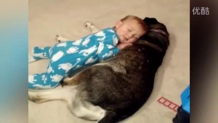 【冯导】犯困婴儿拥抱狗狗睡觉