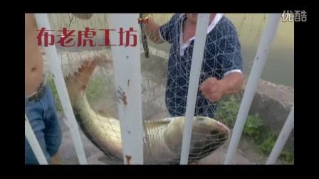 最牛甲鱼枪打几十公斤的鱼都没问题!