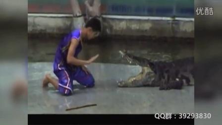 剪辑5个作死招惹鳄鱼被咬视频集锦