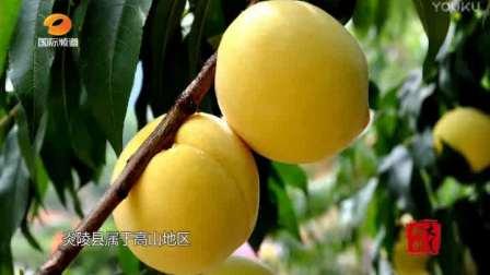 中国炎陵黄桃——平乐乡