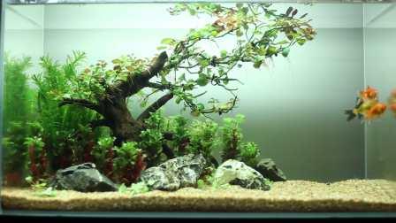 鱼缸造景水族箱装饰星球水族沉木杜鹃根水草缸金鱼热带鱼观赏鱼视频水生植物活体水草