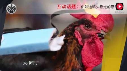 电影大片的最难镜头竟然是用鸡头拍摄的