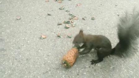 丹东锦江山公园的松鼠
