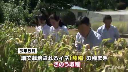 """天皇ご一家、皇居内で""""陸稲""""を収穫"""