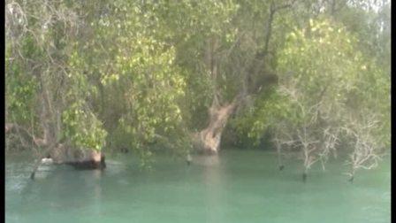 无人岛的红树林 Kurau dan Pulau
