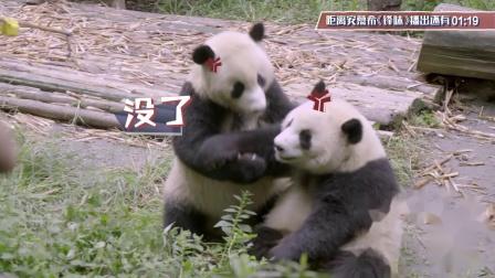 """【混剪】《锋味》谢霆锋张靓颖花式""""钓熊猫"""",滚滚真的可以这么可爱!"""
