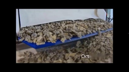 OctoFrost单体速冻腌蘑菇
