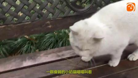 漠羽系列特别专辑 7 无辜的猫妈妈