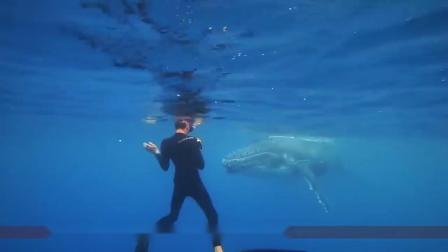 """如果你在深海里潜水,不幸被饥饿的鲸鱼""""误吞""""要怎么办"""