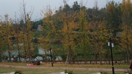 麻阳苗族自治县城东长河公园紫藤湖畔风光,20191117