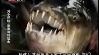 《河中巨怪》第二季第1集中文版:刚果河的猛鱼(Demon Fish)