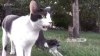 【拍客】老伯为流浪猫送食物坚持3年多风雨无阻
