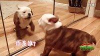 【TMD】动物精选NO1
