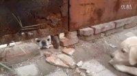 洋葱逗狗2