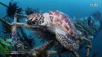 【马来西亚诗巴丹潜水】超清震撼水下世界—潜入诗巴丹