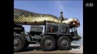 世界上最大的蛇在红海被捕获