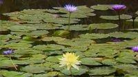 冥想指导1:使用语音奥姆 哈瑞 奥姆 蕙兰瑜伽