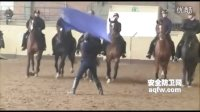 镇暴用警马训练课程