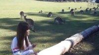 【雪妍出品】用心看世界 - 雪妍带您一起近距离接触超萌的小袋鼠