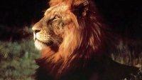 雄狮vs鬣狗群