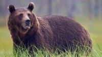 德国狩猎梗vs棕熊