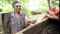 中毒的星球:亚马逊雨林