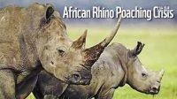 非洲非法偷猎犀牛危机 - WWF