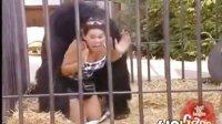 大猩猩性骚扰吓尿女游客