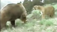 动物搏杀—意想不到的结果
