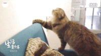 【YUKKIK】☻生活乐分享②-猫猫餐厅