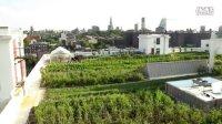【杰夫罗顿】第十集 屋顶农场