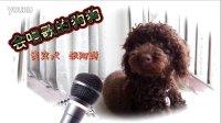 会唱歌的狗狗