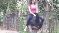 骑在假期的鸵鸟