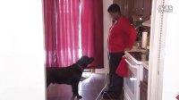 《走进美国》美国协助犬是怎样炼成的?
