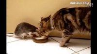 现实版猫和老鼠,相亲相爱的一家【每日一笑]2015.04.13