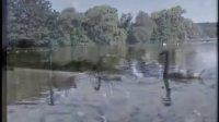 轻音乐 莱茵河之恋