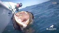 海钓 巨物石斑!