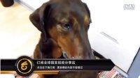 爆笑汪星人集锦(三)——内疚狗系列