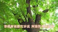 佛教音乐 佛教歌曲 《菩提树下》 hao金格格视频制作(26)