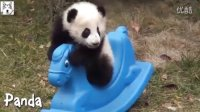 治愈搞笑的动物们7:超级萌的各种动物宝宝视频