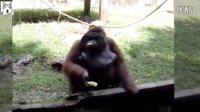 治愈搞笑的动物们8:顽皮机灵的猴子们