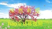 经典歌曲《依然有爱》hao金格格视频(34)