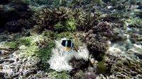 JOJO自然生活 - 峥爷在菲律宾LALAGUNA带你找小丑鱼NEMO