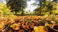 【剑桥琴侠传】枫叶赏味期 纯钢琴温暖岁末的秋天