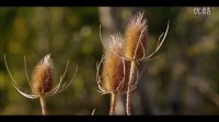 [J&K.4K.演示片] 纯净的大自然Pure Nature