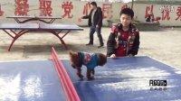 【萌犬豆比阿sir】学习球台跨栏 轻松自如!(13)